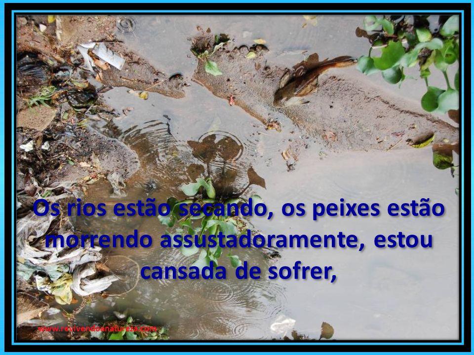 Os rios estão secando, os peixes estão morrendo assustadoramente, estou cansada de sofrer, Os rios estão secando, os peixes estão morrendo assustadoramente, estou cansada de sofrer, www.revivendoanatureza.com