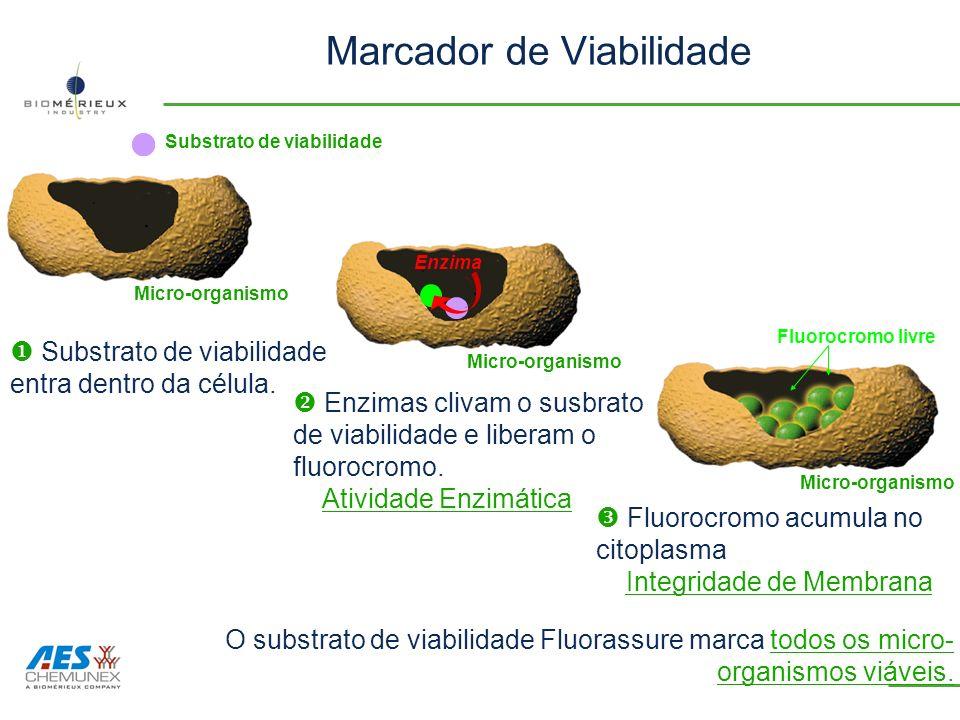 Marcador de Viabilidade Substrato de viabilidade Micro-organismo Enzima Substrato de viabilidade entra dentro da célula. Fluorocromo acumula no citopl