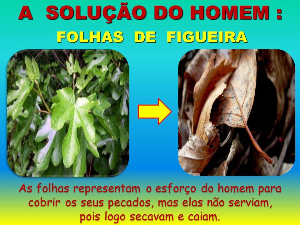 FOLHAS DE FIGUEIRA FOLHAS DE FIGUEIRA A SOLUÇÃO DO HOMEM : As folhas representam o esforço do homem para cobrir os seus pecados, mas elas não serviam,