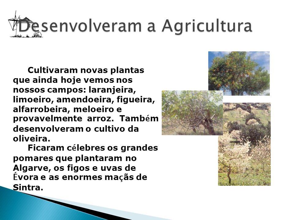 Cultivaram novas plantas que ainda hoje vemos nos nossos campos: laranjeira, limoeiro, amendoeira, figueira, alfarrobeira, meloeiro e provavelmente ar