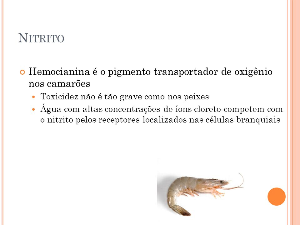 N ITRITO Hemocianina é o pigmento transportador de oxigênio nos camarões Toxicidez não é tão grave como nos peixes Água com altas concentrações de íons cloreto competem com o nitrito pelos receptores localizados nas células branquiais