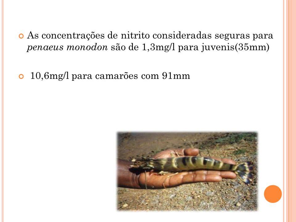 As concentrações de nitrito consideradas seguras para penaeus monodon são de 1,3mg/l para juvenis(35mm) 10,6mg/l para camarões com 91mm