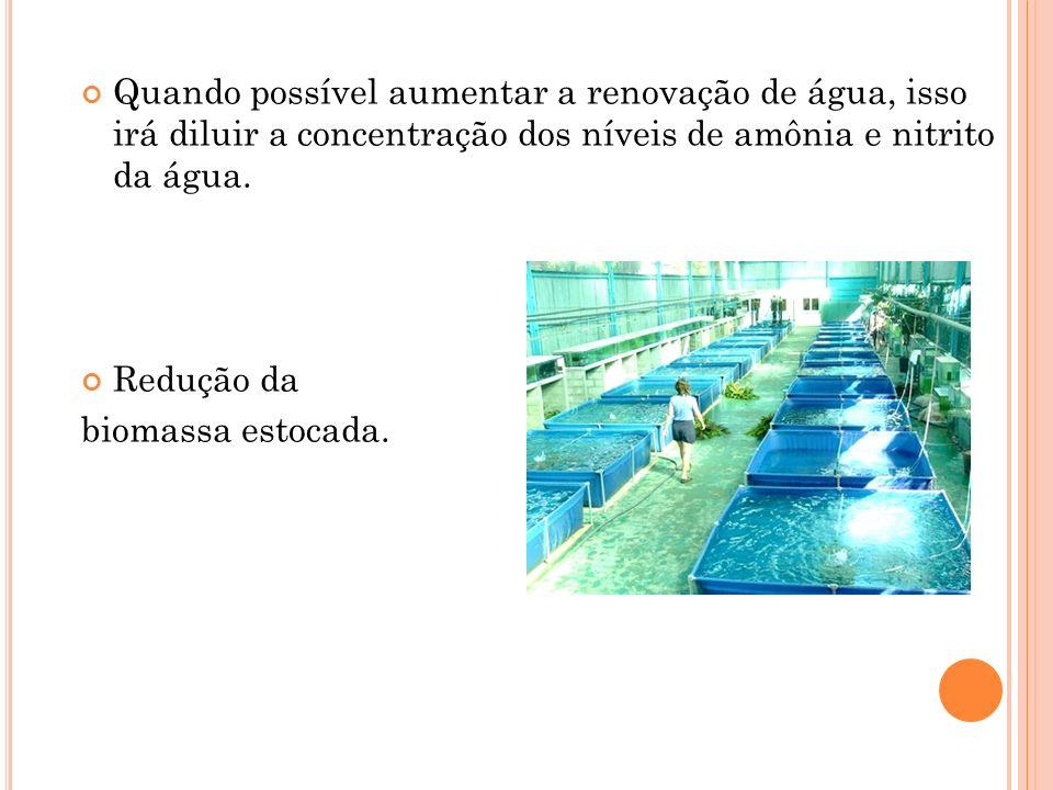 Quando possível aumentar a renovação de água, isso irá diluir a concentração dos níveis de amônia e nitrito da água.