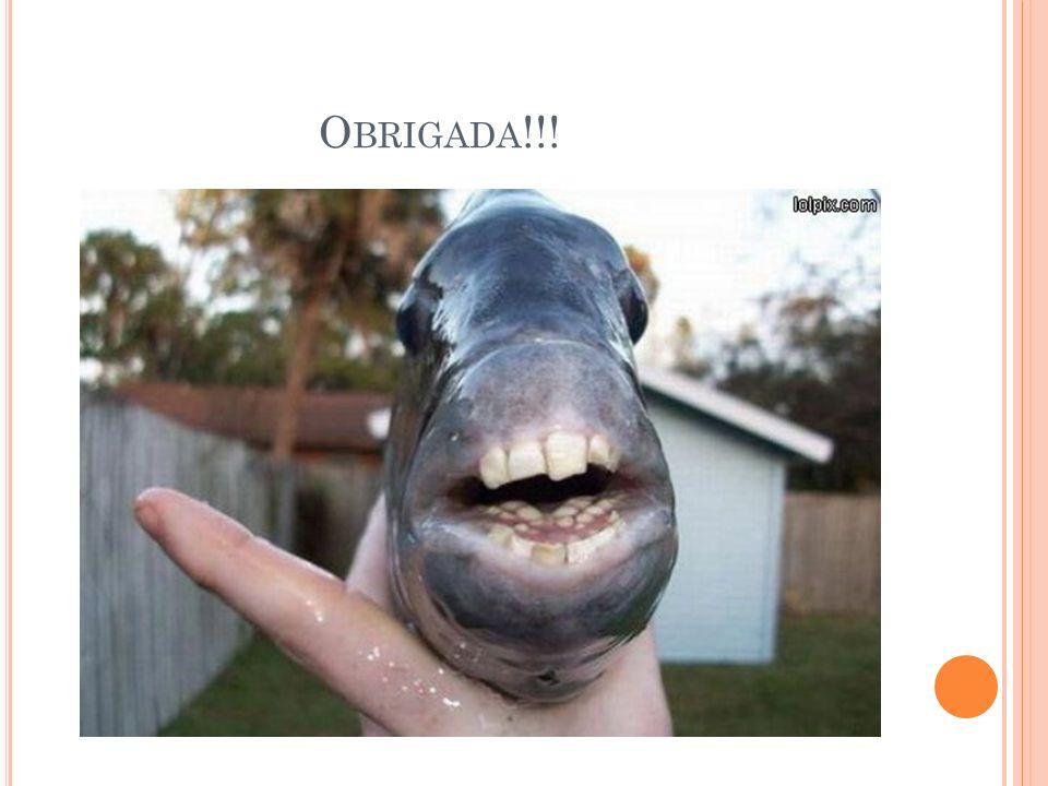 O BRIGADA !!!