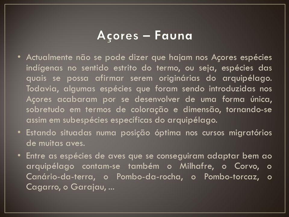 Actualmente não se pode dizer que hajam nos Açores espécies indígenas no sentido estrito do termo, ou seja, espécies das quais se possa afirmar serem