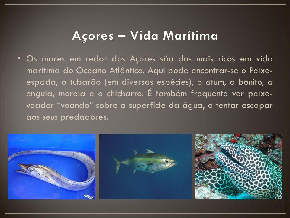 Os mares em redor dos Açores são dos mais ricos em vida marítima do Oceano Atlântico. Aqui pode encontrar-se o Peixe- espada, o tubarão (em diversas e
