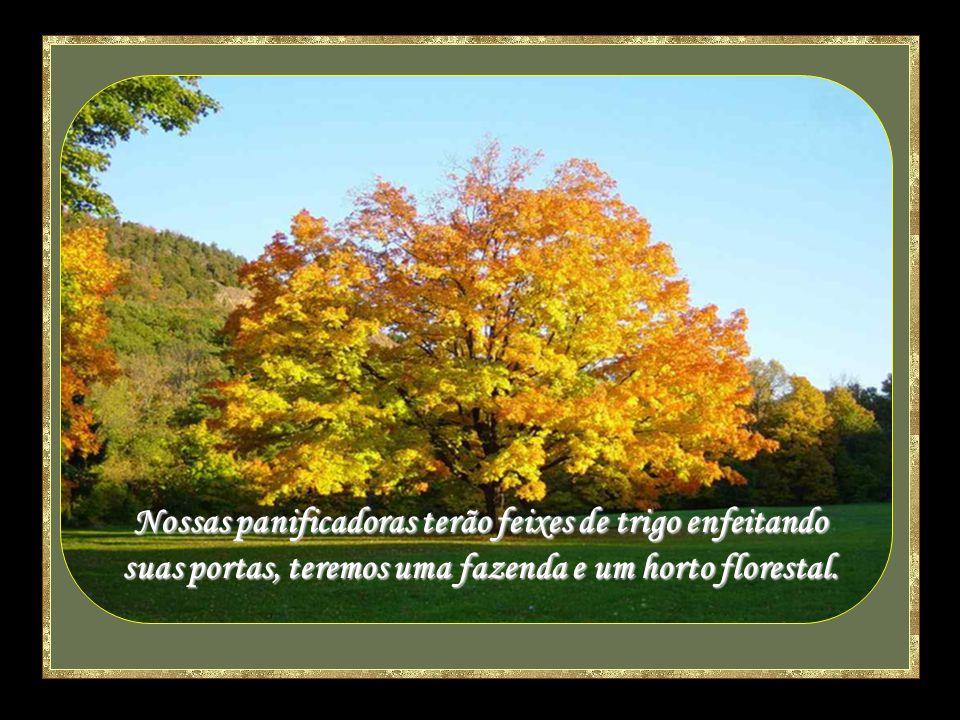 A árvore de Paulo, a árvore de Manoel, a árvore de Ruth, a árvore de Roseta.