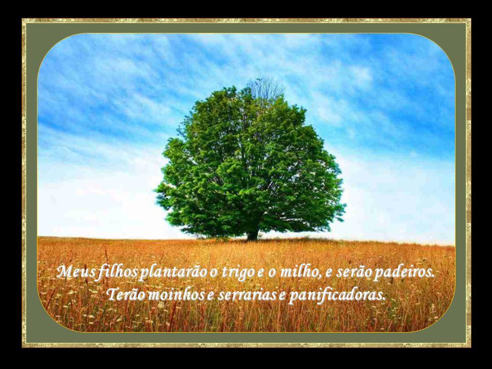 Meus filhos plantarão o trigo e o milho, e serão padeiros.