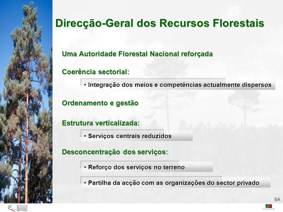 Direcção-Geral dos Recursos Florestais Partilha da acção com as organizações do sector privado Partilha da acção com as organizações do sector privado