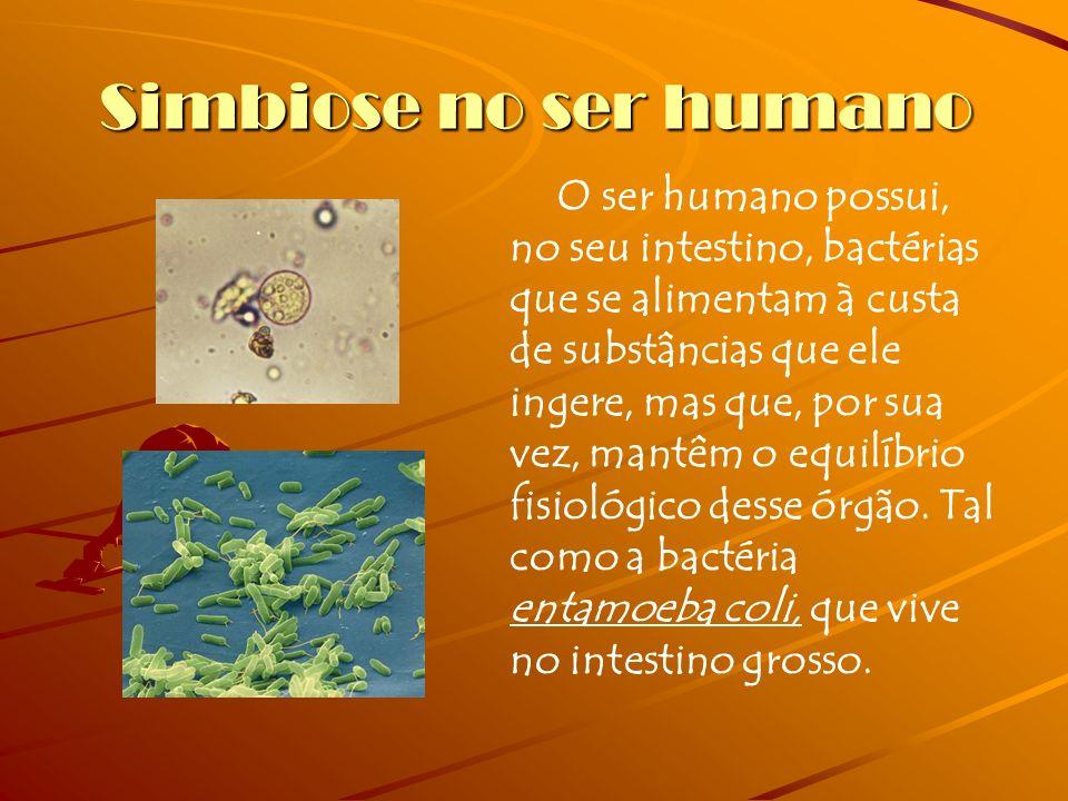 Simbiose no ser humano O ser humano possui, no seu intestino, bactérias que se alimentam à custa de substâncias que ele ingere, mas que, por sua vez, mantêm o equilíbrio fisiológico desse órgão.