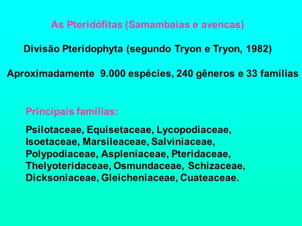 As Pteridófitas (Samambaias e avencas) Divisão Pteridophyta (segundo Tryon e Tryon, 1982) Aproximadamente 9.000 espécies, 240 gêneros e 33 famílias Pr