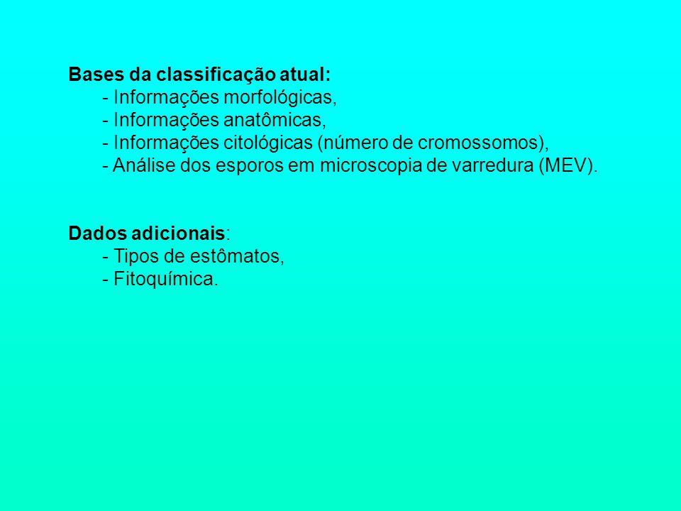 Bases da classificação atual: - Informações morfológicas, - Informações anatômicas, - Informações citológicas (número de cromossomos), - Análise dos e