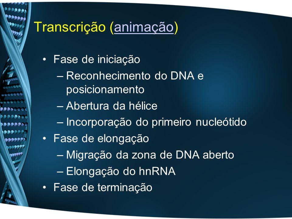 Transcrição (animação)animação Fase de iniciação –Reconhecimento do DNA e posicionamento –Abertura da hélice –Incorporação do primeiro nucleótido Fase de elongação –Migração da zona de DNA aberto –Elongação do hnRNA Fase de terminação