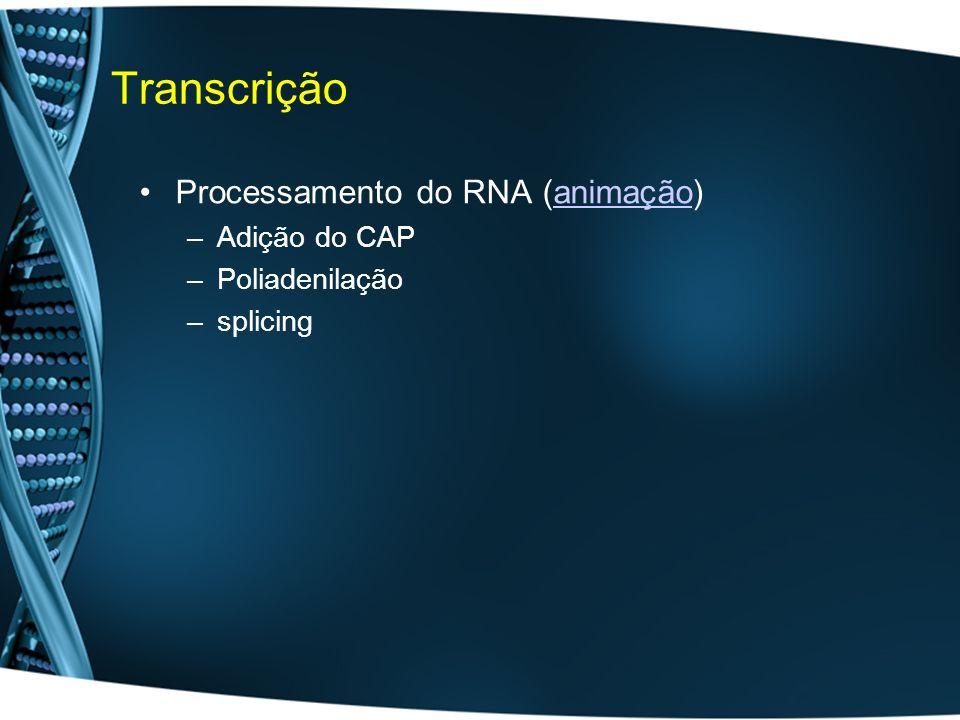 Transcrição Processamento do RNA (animação)animação –Adição do CAP –Poliadenilação –splicing