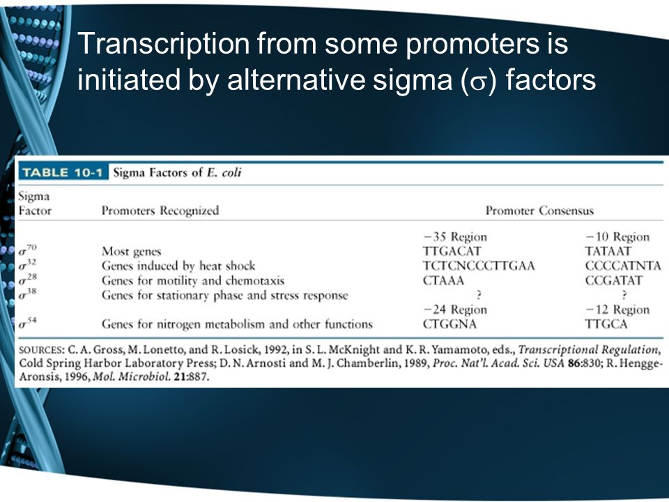 Transcription from some promoters is initiated by alternative sigma ( ) factors
