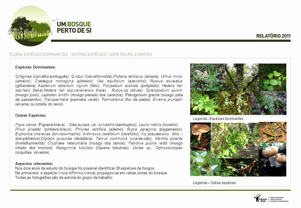 Espécies Dominantes: Q.faginea (carvalho-português); Q.robur (carvalho-roble);Pistacia lentiscus (aroeira); Ulmus minor (ulmeiro); Crataegus monogyna (pilriteiro); Illex aquifolium (azevinho); Ruscus aculeatus (gilberdeira) Asplenium adiantum nigrum (feto); Polypodium australe (polipódio); Hedera heli ssp.helix (hera);Hedera heli ssp.canariensis (hera); Rubus.sp (silvas); Scleropodium purum (musgo puro); Leptodon smithii (musgo penado dos caracóis); Pterogonium gracile (musgo pata de passarinho); Flavoparmelia (parmelia verde); Parmotrema (flor de pedra); Ervenia prunastri (ervenia ou orzella do reino).