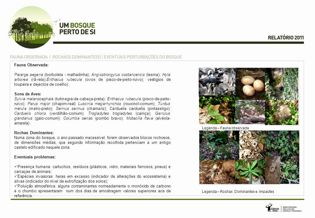 Fauna Observada: Pararge aegeria (borboleta - malhadinha); Angiostrongylus costaricencis (lesma); Hyla arborea (rã-rela);Erithacus rubecula (ovos de pisco-de-peito-ruivo); vestigios de toupeira e dejectos de coelho).