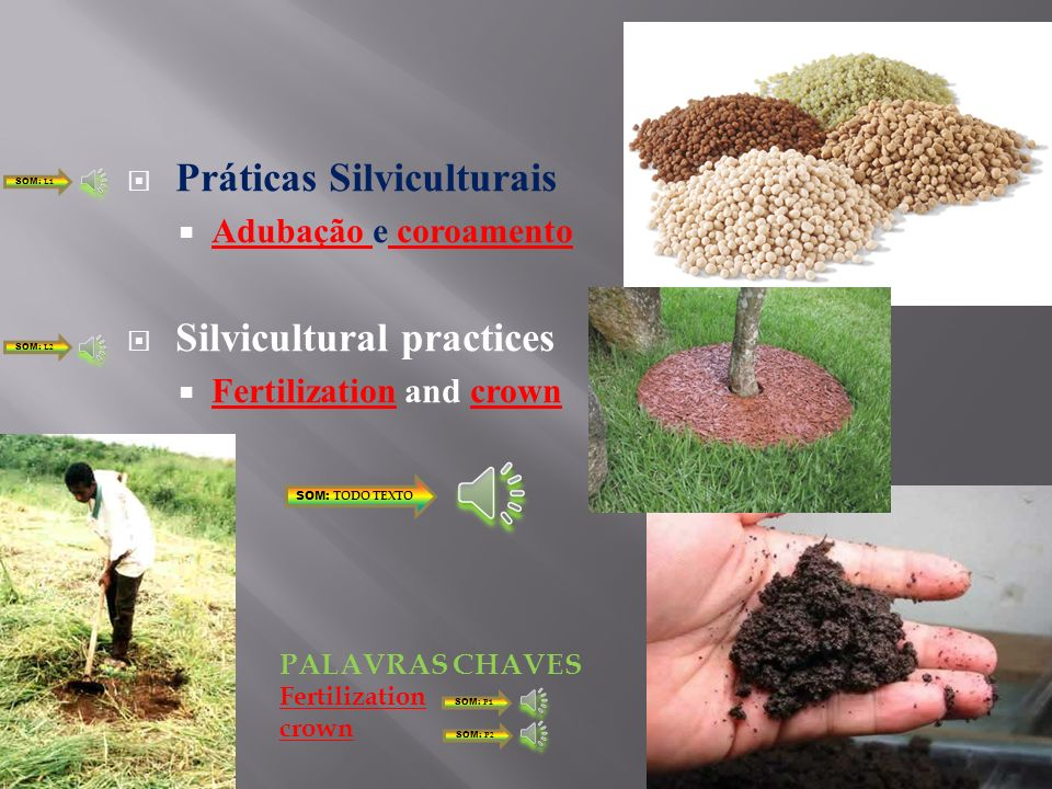 Práticas Silviculturais Adubação e coroamento Silvicultural practices Fertilization and crown SOM: TODO TEXTO SOM: L1 SOM: L2 Fertilization crown PALAVRAS CHAVES SOM: P1 SOM: P2