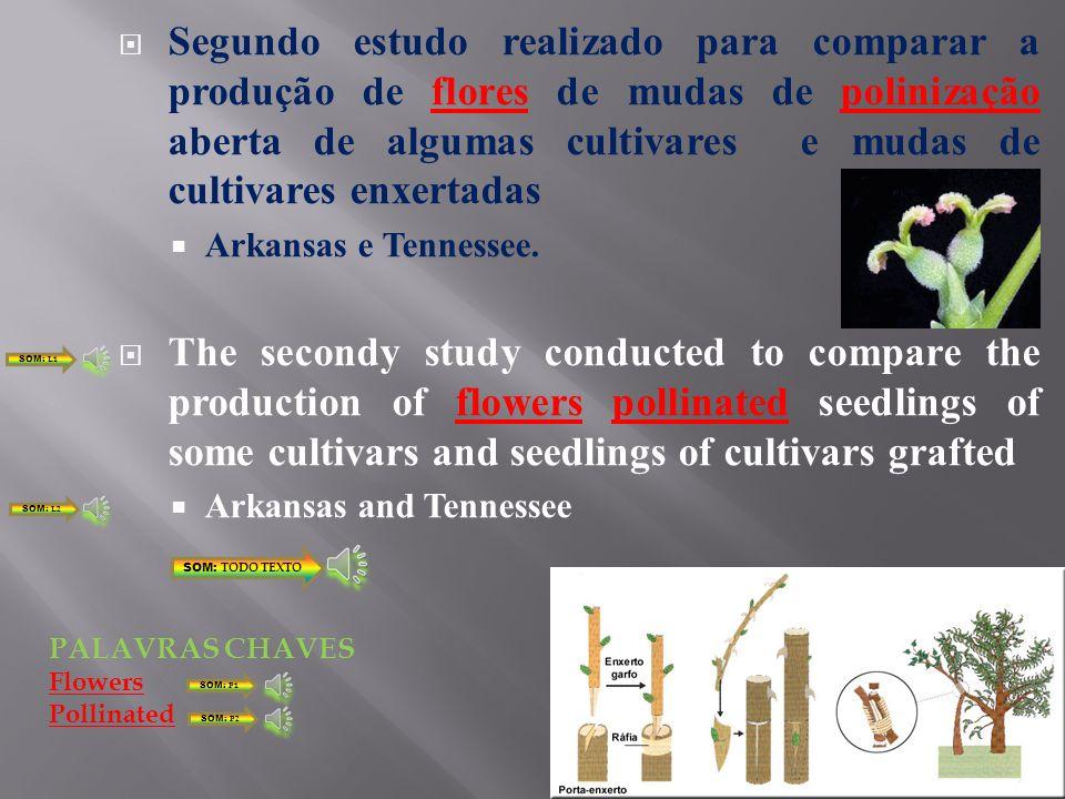 Práticas Silviculturais Adubação e coroamento Silvicultural practices Fertilization and crown SOM: TODO TEXTO SOM: L1 SOM: L2 Fertilization crown PALAVRAS CHAVES SOM: P1 SOM: P2
