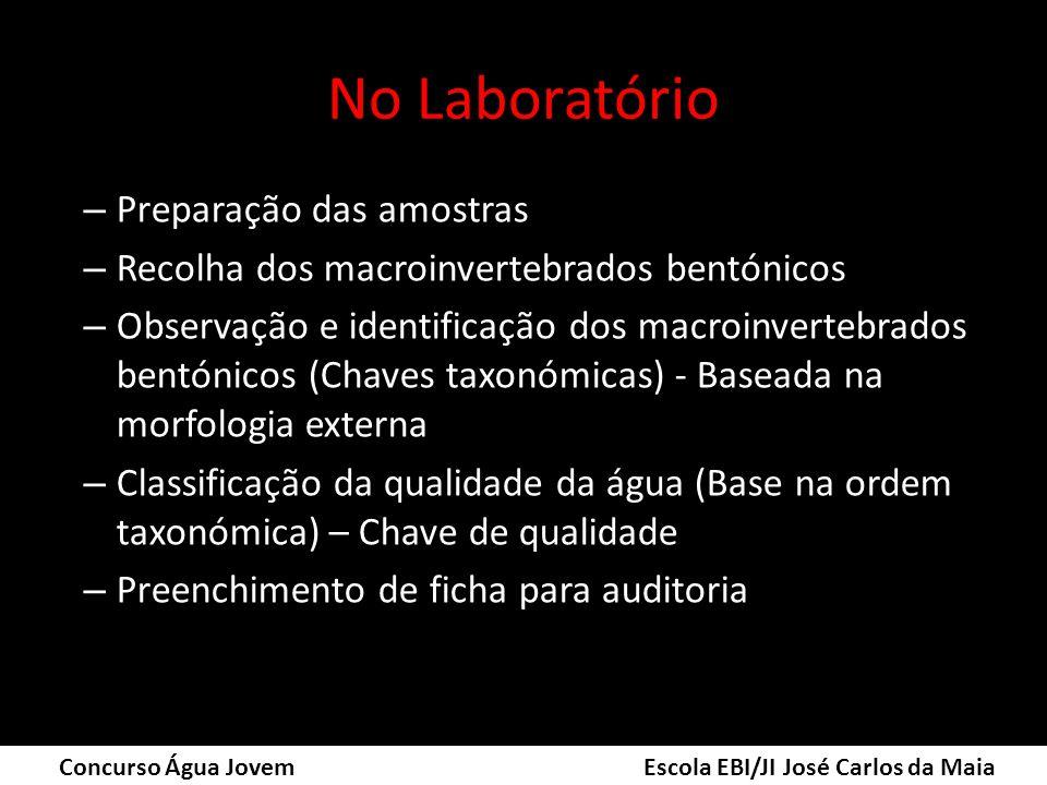 No Laboratório – Preparação das amostras – Recolha dos macroinvertebrados bentónicos – Observação e identificação dos macroinvertebrados bentónicos (C