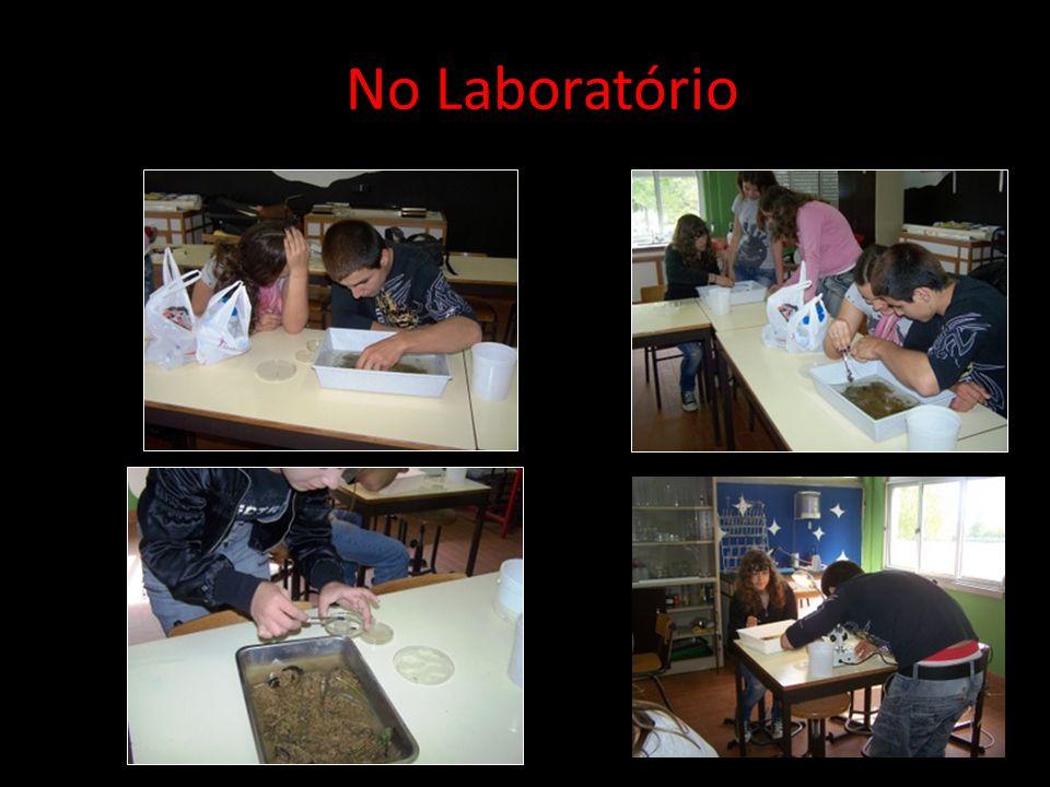 Actividades Desenvolvidas com os Alunos No Laboratório