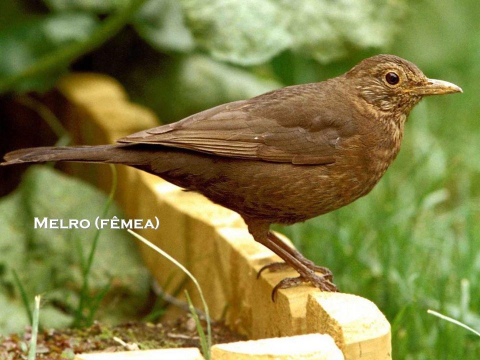 AVIBASE Avibase é um sistema de informação em forma de base de dados sobre todas as aves do mundo e contém quase 4 milhões de registos sobre cerca de 10.000 espécies e 22.000 subespécies de aves, incluindo distribuição, informação, taxonomia, sinónimos em diferentes idiomas e muito mais.