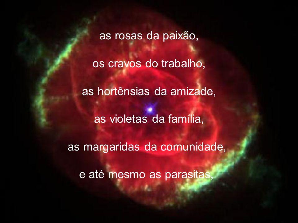 as rosas da paixão, os cravos do trabalho, as hortênsias da amizade, as violetas da família, as margaridas da comunidade, e até mesmo as parasitas,