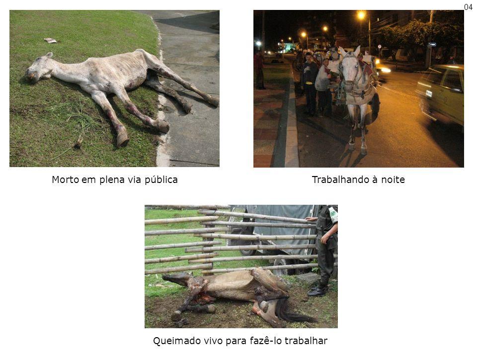 Trabalhando à noiteMorto em plena via pública Queimado vivo para fazê-lo trabalhar 04