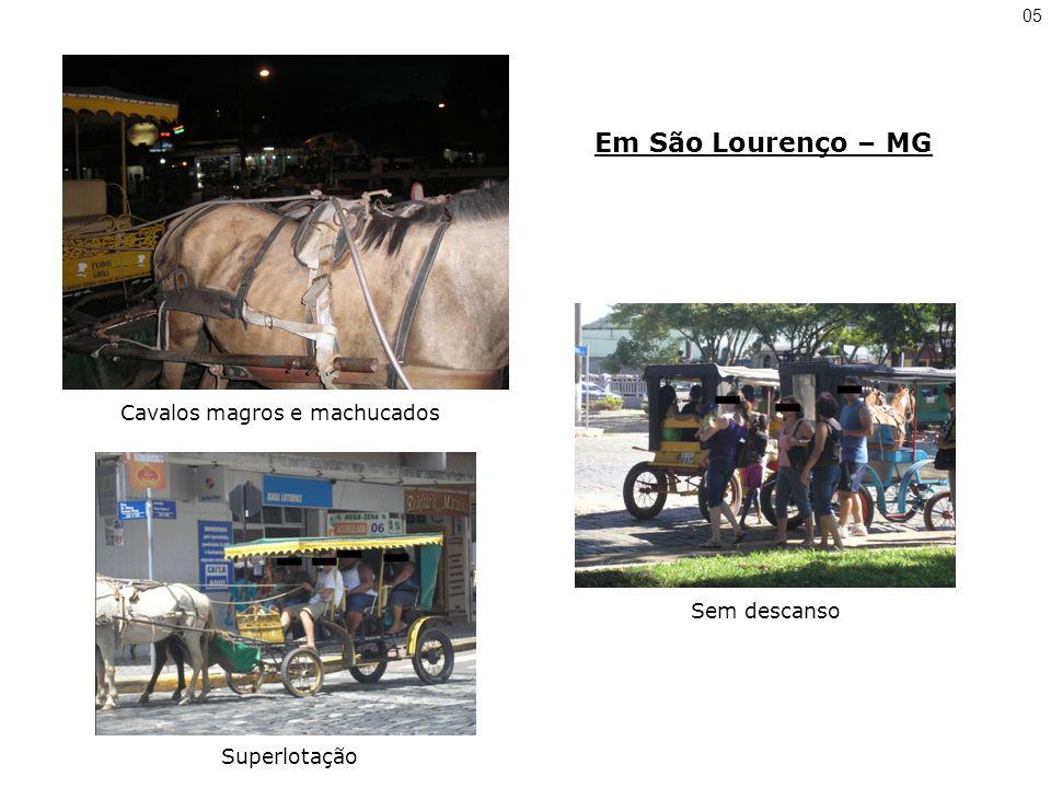 Em São Lourenço – MG Cavalos magros e machucados Superlotação Sem descanso 05
