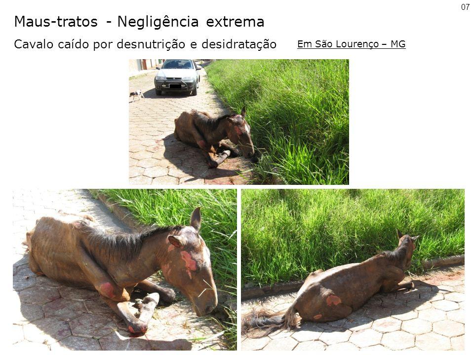 Maus-tratos - Negligência extrema Cavalo caído por desnutrição e desidratação 07 Em São Lourenço – MG