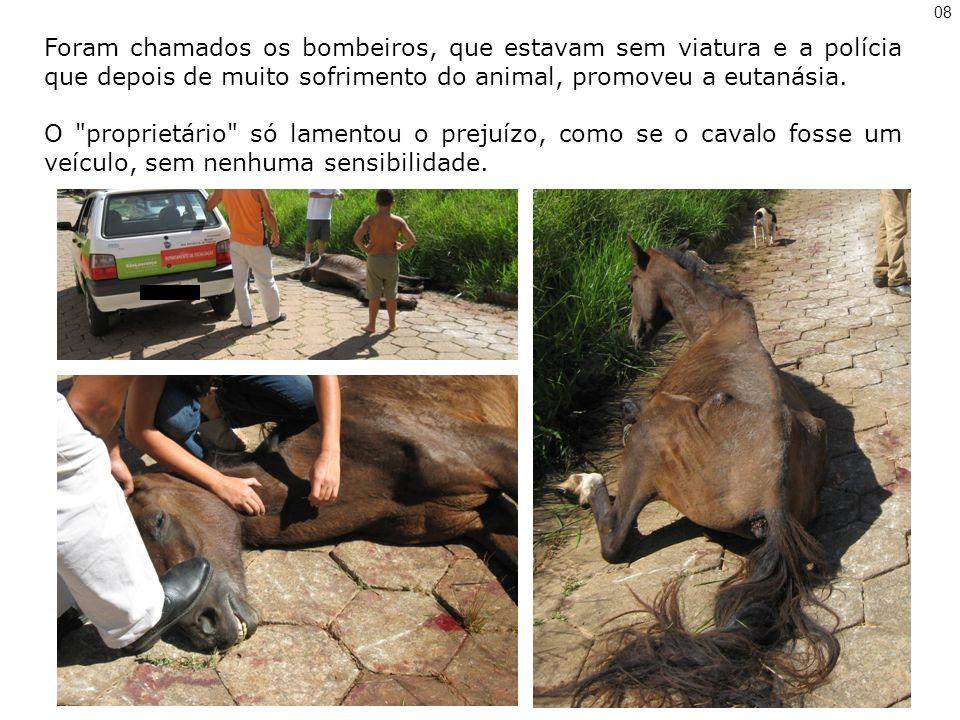 Foram chamados os bombeiros, que estavam sem viatura e a polícia que depois de muito sofrimento do animal, promoveu a eutanásia.