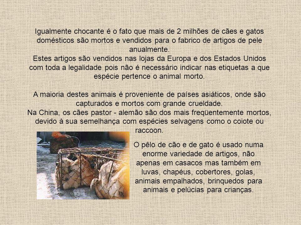 Comércio de Peles Os processos de abate dos animais são igualmente deploráveis, desde pauladas na cabeça a eletrocussão. As chinchilas são geralmente