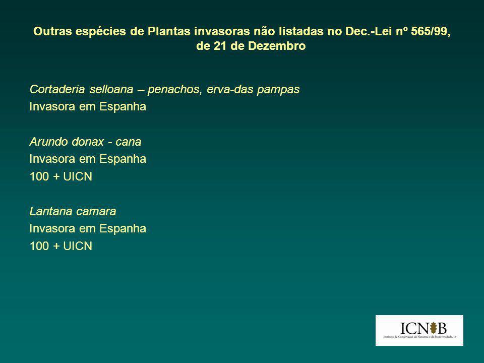 Outras espécies de Plantas invasoras não listadas no Dec.-Lei nº 565/99, de 21 de Dezembro Cortaderia selloana – penachos, erva-das pampas Invasora em Espanha Arundo donax - cana Invasora em Espanha 100 + UICN Lantana camara Invasora em Espanha 100 + UICN