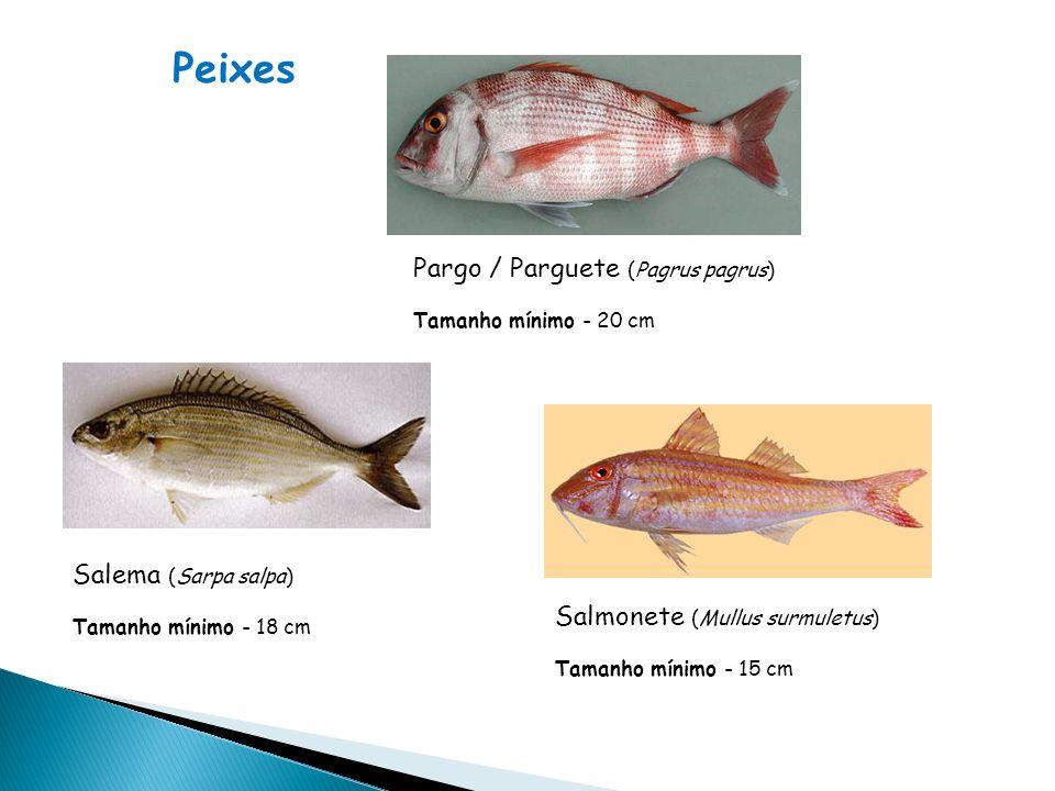Pargo / Parguete (Pagrus pagrus) Tamanho mínimo - 20 cm Salema (Sarpa salpa) Tamanho mínimo - 18 cm Salmonete (Mullus surmuletus) Tamanho mínimo - 15 cm Peixes