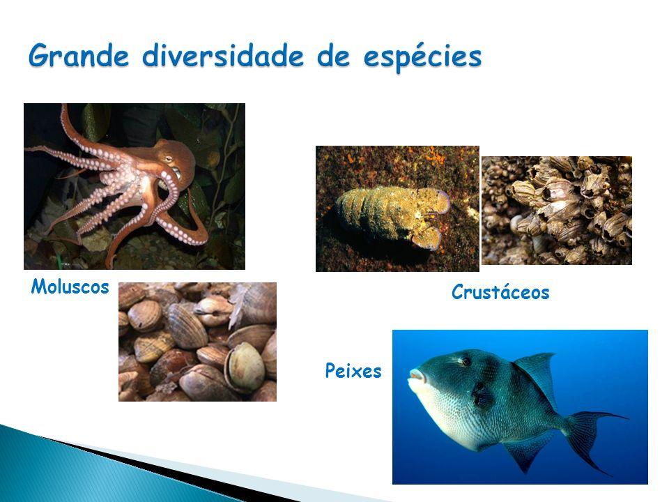 Moluscos Animais invertebrados de corpo mole Gastrópodes Com uma concha achatada ou espiralada Com duas conchas unidas dorsalmente Bivalves Cefalópodes Com o pé transformado em 8 ou 10 tentáculos, providos de ventosas que rodeiam a boca