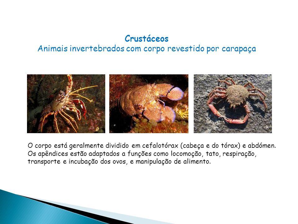 Crustáceos Animais invertebrados com corpo revestido por carapaça O corpo está geralmente dividido em cefalotórax (cabeça e do tórax) e abdómen.