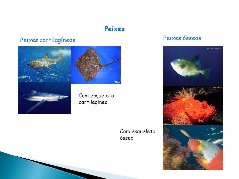 Peixes Peixes cartilagíneos Com esqueleto cartilagíneo Peixes ósseos Com esqueleto ósseo