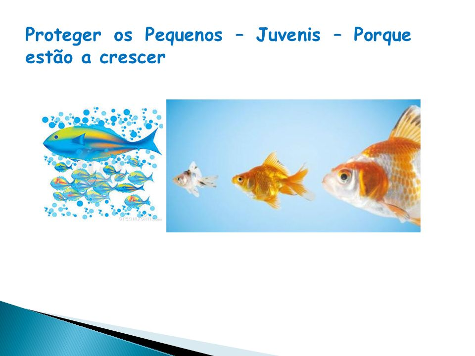 Os recursos do mar só são renováveis se nós respeitamos o ritmo biológico (crescimento e reprodução), bem como a sua capacidade de recuperação Saber escolher o pescado certo é ajudar a preservar equilíbrio do ambiente marinho e dos ecossistemas em geral.