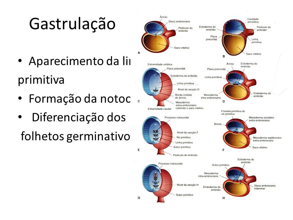 Gastrulação Aparecimento da linha primitiva Formação da notocorda Diferenciação dos folhetos germinativos