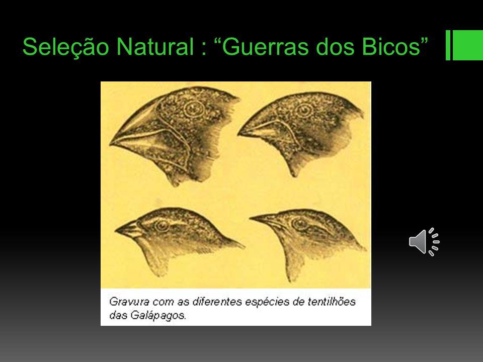 Ancestralidade Segundo a teoria de Darwin, tanto os organismos vivos como os que encontrou fossilizados se originavam de um único ancestral comum e se