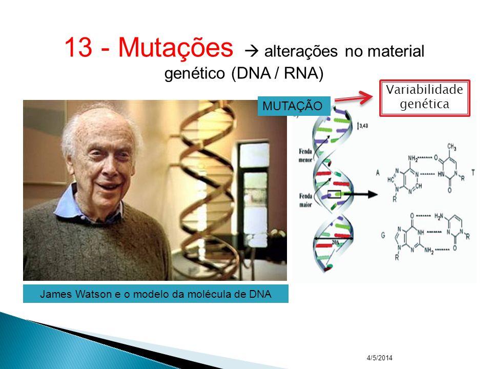 4/5/2014www.biologiafacil.v10.com.br 12 - Fenocópia imitação de um fenótipo (uso de talidomida) Exemplo: focomelia