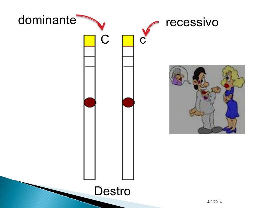 4/5/2014 6 – Alelo dominante Se manifesta em dose simples ou dose dupla 7 – Alelo recessivo Só se manifesta em dose dupla Exemplo: USO DA MÃO (destro