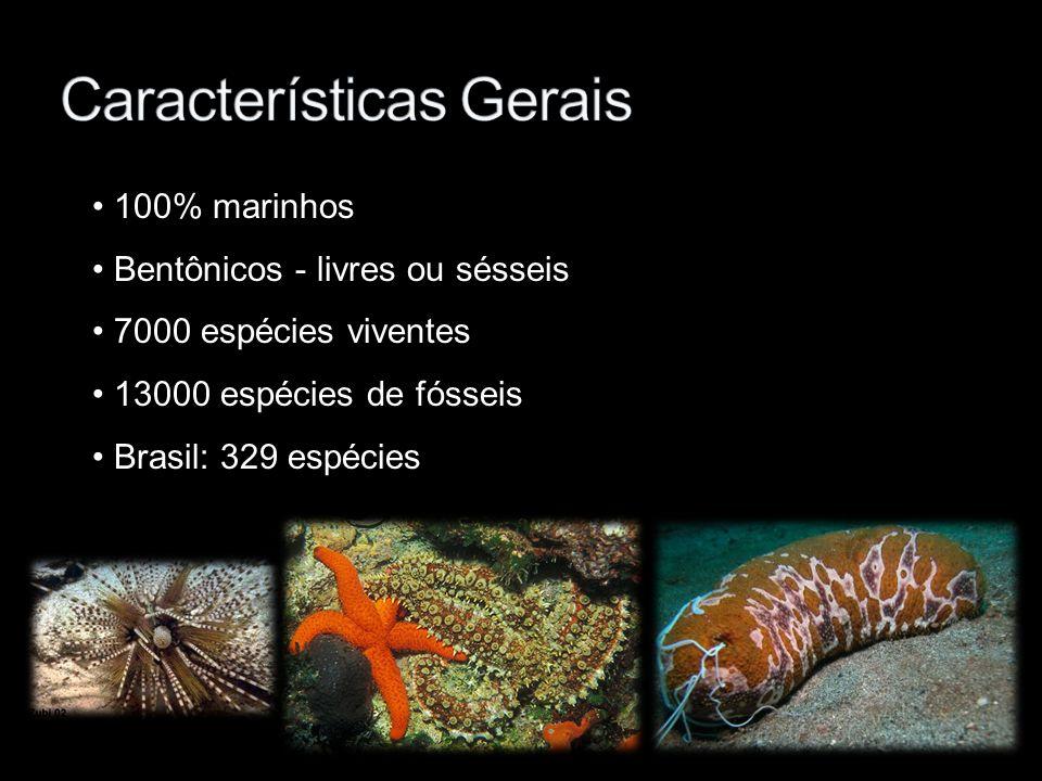 100% marinhos Bentônicos - livres ou sésseis 7000 espécies viventes 13000 espécies de fósseis Brasil: 329 espécies