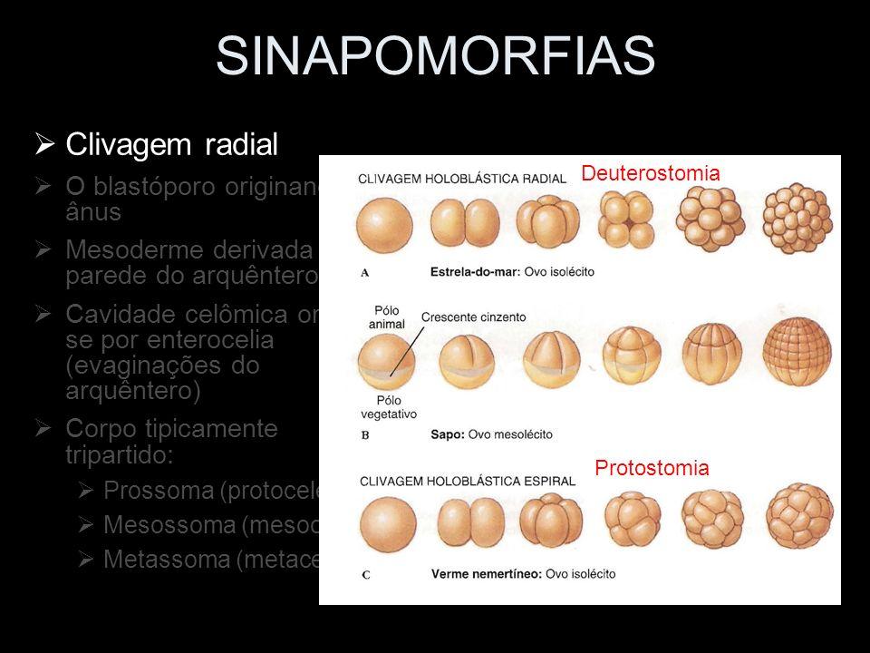 Classe Asteroidea Classe Concentricycloidea Classe Ophiuroidea Classe Echinoidea Classe Holothuroidea Classe Crinoidea