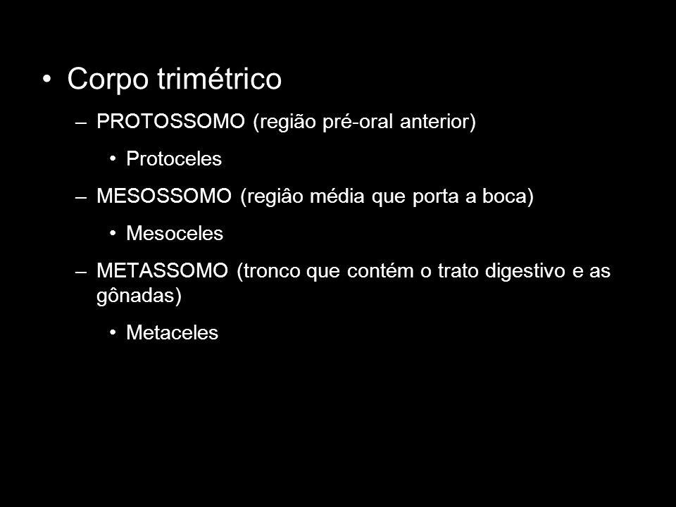 Corpo trimétrico –PROTOSSOMO (região pré-oral anterior) Protoceles –MESOSSOMO (regiâo média que porta a boca) Mesoceles –METASSOMO (tronco que contém
