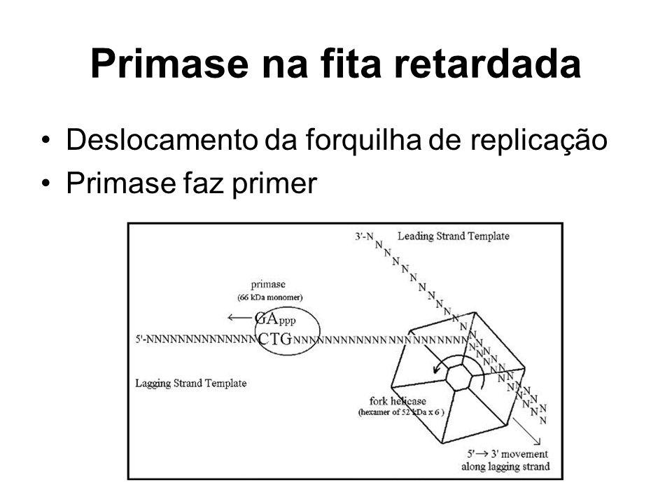 Primase na fita retardada Deslocamento da forquilha de replicação Primase faz primer