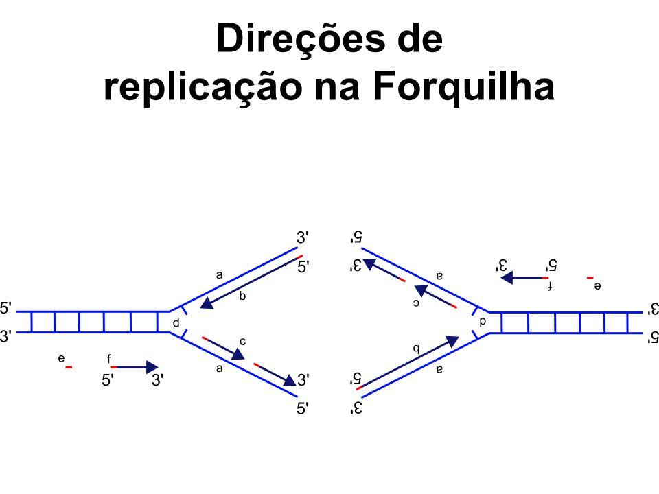 Direções de replicação na Forquilha