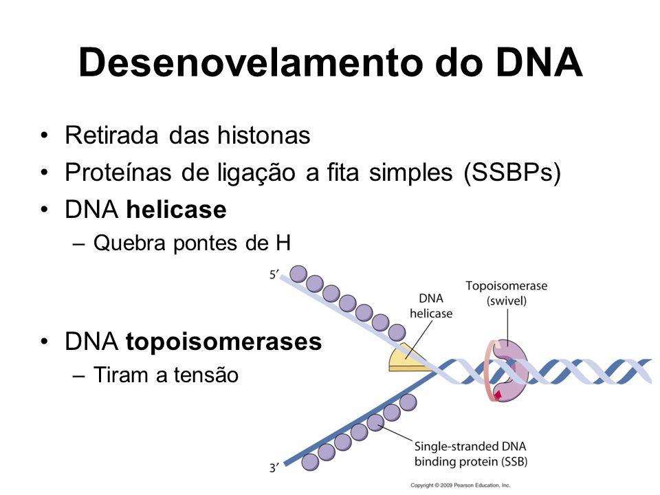 Desenovelamento do DNA Retirada das histonas Proteínas de ligação a fita simples (SSBPs) DNA helicase –Quebra pontes de H DNA topoisomerases –Tiram a tensão