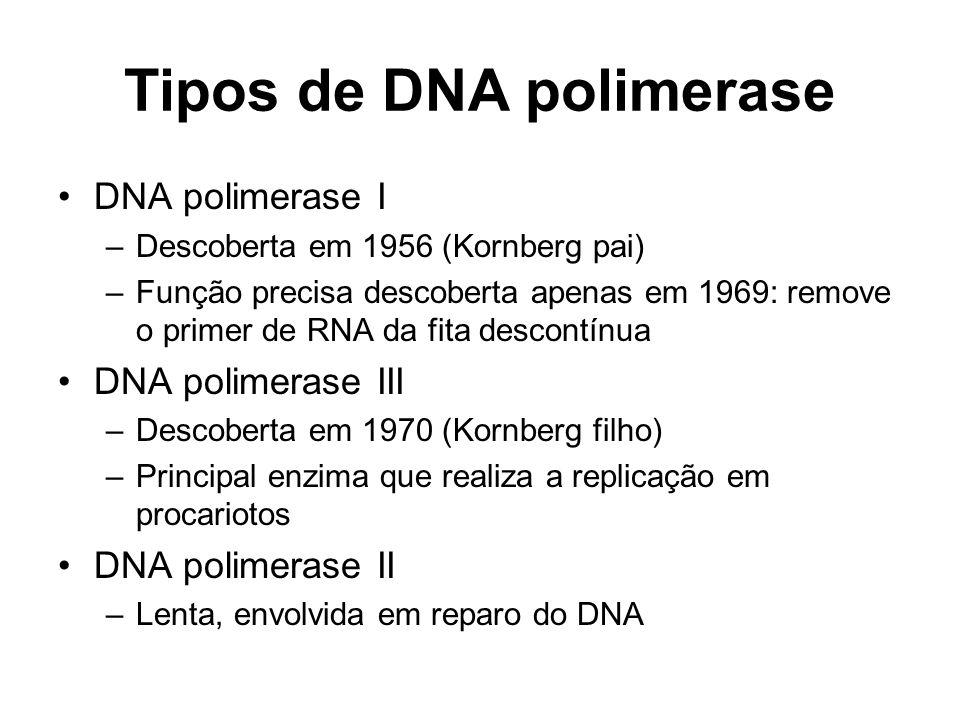Tipos de DNA polimerase DNA polimerase I –Descoberta em 1956 (Kornberg pai) –Função precisa descoberta apenas em 1969: remove o primer de RNA da fita descontínua DNA polimerase III –Descoberta em 1970 (Kornberg filho) –Principal enzima que realiza a replicação em procariotos DNA polimerase II –Lenta, envolvida em reparo do DNA
