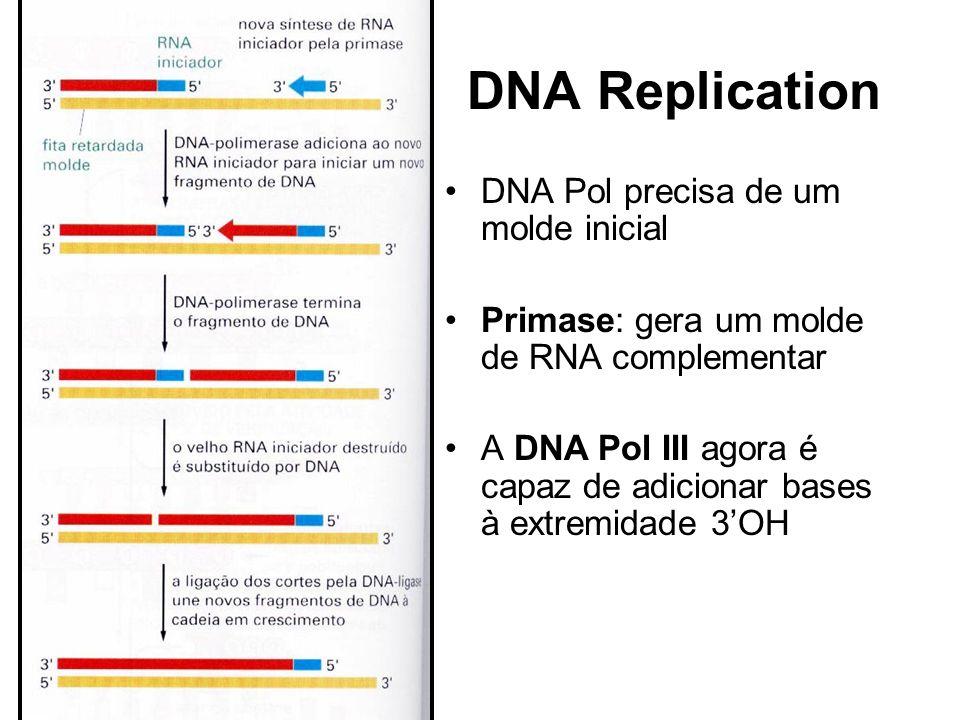 DNA Replication DNA Pol precisa de um molde inicial Primase: gera um molde de RNA complementar A DNA Pol III agora é capaz de adicionar bases à extremidade 3OH
